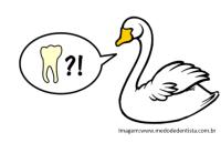 dente do cisne